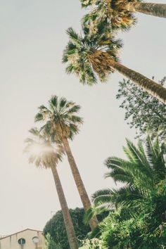 Sun soaked palms.
