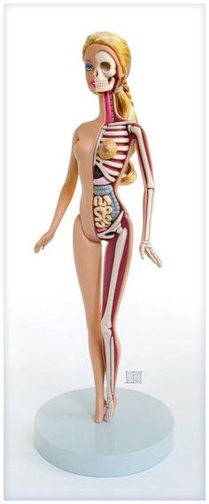 totalimmortalbeloved: Barbie Anatomical Model..by Jason Freeny.. via  Hi-Fructose Magazine
