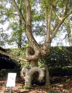 Amazing Trees #TangledTreeWines
