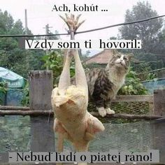 Tierischer Humor, Man Humor, Croatian Language, Animals And Pets, Cute Animals, Dating My Daughter, Funny As Hell, Fit Chicks, Look At You