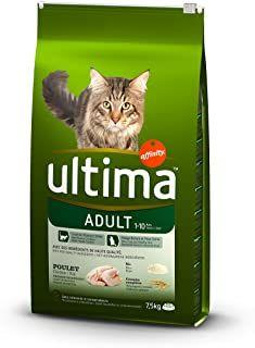 Comida Para Gatos Mima A Tu Pequeno Rinconesadorables Es