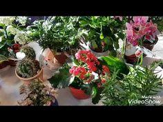 Îngrășăminte pentru flori de cameră.Cea mai bună infuzie cu vitamine.Chiar si pentru Orhideii - YouTube Mai, Garden, Youtube, Free, Interiors, Plant, Garten, Lawn And Garden, Gardens