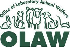 animal protection law - Google 搜索 Animal Law, Animal Science, Animal Protection, Animal Welfare, Career Development, Social Media, Animals, Google, Animales