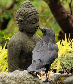 Buddha and a crow. Makes me wonder if crows are spiritual animals/creatures. Quoth The Raven, Foto Fun, Raven Art, Crow Or Raven, Jackdaw, Crows Ravens, Wow Art, Art Plastique, Bird Feathers