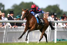 Trip to Paris (IRE) 2011 B.g. (Champs Elysees (GB)-La Grande Zoa (IRE) by Fantastic Light (USA) 1st Gold Cup (GB-G1,20fT,Royal Ascot) (photo: Getty)