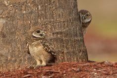 Hide-and-seek game ;-)  2011 Audubon Magazine Photography Awards: Top 100 | Audubon Magazine