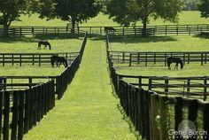 Horses in the paddocks