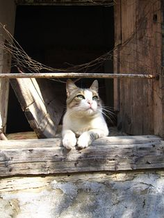 """""""If homeless cats could talk, they would probably say, 'give me shelter, food, love, and companionship, and I'll be yours forever."""" --Susan Easterly"""