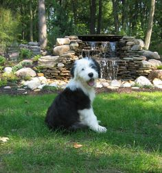 OES  Puppy Murphy sitting by the waterfall