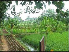 Rice-Fish Farming_1D40A.mov