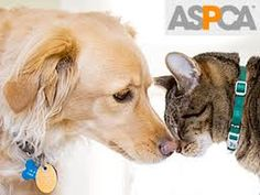 Help prevent animal abuse. Please, they deserve better. We all need to be loved they are no exception.
