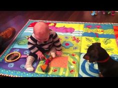 Dachshund tries to teach baby to play fetch (VIDEO) » DogHeirs | Where Dogs Are Family « Keywords: funny video, Dachshund, Baby, cute video