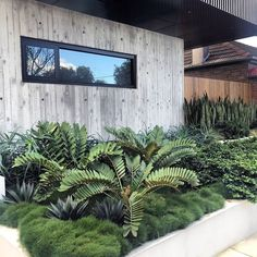 Tropical garden design – Site visit today to project completed a few years back These Cardboard Palms and Agave poking out of the Korean Clumping Grass is insane 👌🏻 cityscaper ard bettergardenbiggerlife Architec - Gardening Home Landscaping, Tropical Landscaping, Front Yard Landscaping, Palm Garden, Tropical Garden Design, Garden Grass, Garden Pool, Sydney Gardens, Coastal Gardens