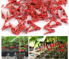 APPROX 40 grafting clips ideal for grafting a variety of plants . New Bonsai Grafting Clips Tomato Grafting Clips Eggplant Grafting Clamp New Style Durable Plastic Grafting Clips Garden Vegetable Flower Tomato Vine Bushes Plants Planting Vegetables, Vegetable Garden, Tomato Vine, Bush Plant, Plant Supports, Free Plants, Garden Ornaments, Garden Supplies, Houseplants