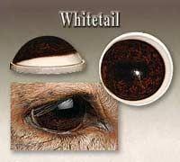Whitetail Deer Glass Eyes