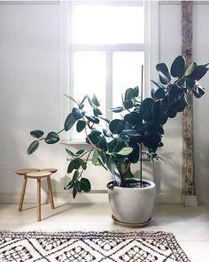 Jacquemin aude jacquemin sur pinterest - Plantes d int u00e9rieur faciles d entretien ...