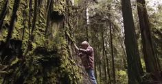 The Man Who Planted Trees: A Conversation with David Milarch, by Awakin Call Editors
