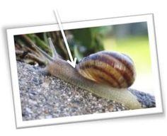 Découverte escargots Preschool Kindergarten, Ms Gs, Montessori, Nature, Animals, Gardens, Snails, Insects, Science Vocabulary