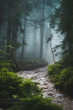 A stone path to follow