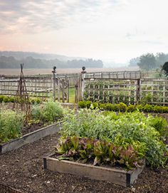 Looks like home...This Ohio kitchen garden is planted with lettuces, basil, chard, and dandelion greens. #gardens - By Ada Calhoun, www.countryliving.com