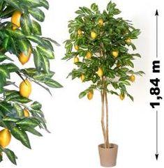 Tuin Műnövény - Citromfa 184 cm Herbs, Plants, Herb, Plant, Planets, Medicinal Plants