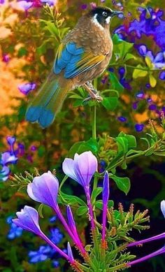 Photography Nature Animals Pretty Birds Ideas For 2019 All Birds, Cute Birds, Pretty Birds, Beautiful Birds, Animals Beautiful, Beautiful Flowers Wallpapers, Beautiful Nature Wallpaper, Exotic Birds, Colorful Birds
