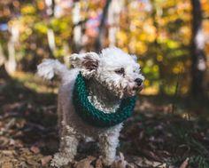 Eshe's Mini Snood Free Knitting Pattern – Malikoo