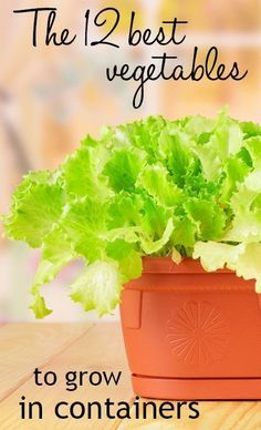 The 12 best vegetables to grow in containers - grow a wide range of veg even in small spaces with this post