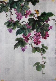 grapes drawing chinese - Google Search