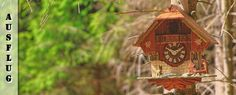 Entdecke die berühmten Schwarzwälder Kuckucksuhren im tollen Uhrenmuseum Furtwangen und auf dem herrlichen Rundwanderweg U(h)rwaldpfad Rohrhardsberg!