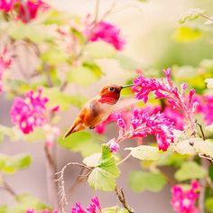 Hummingbird Print Hummingbird Decor Hummer by PeggyCollinsPhotoArt