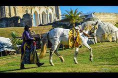 Spectacle sur l'Abbaye de Maillezais #Abbaye #Maillezais #France #dressage #dressagehorse #Phystorique #Traveltime #Equinoxe79 #Vendée #marais #maraispoitevin #roadtrip #horsesofinstagram #Horselover #Love #Horsehead #Horselove #Horseoftheday #Horserider #Horselove #horsemanship #Horselovers #tagafriend #picoftheday #tagsforlikes #horsepower