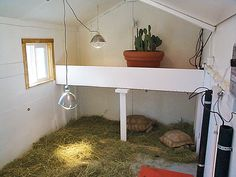 ideas for mort... what do you do with a 50lb tortoise who is growing by the day