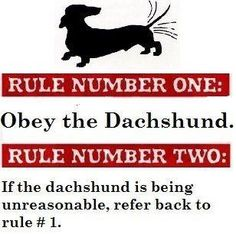 Doxie humor