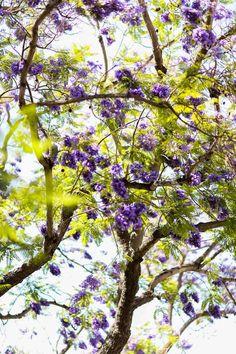 VIVALUXURY - FASHION BLOG BY ANNABELLE FLEUR: UNDER THE JACARANDAS