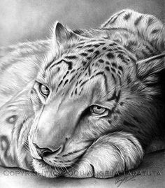 animals pencil animal drawings drawing realistic easy zoo sketches draw cool ilovetodraw siterubix many