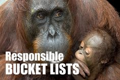 Time to re-think your bucket list and travel more responsibly - read more at http://travelwithkat.com/2015/01/07/responsible-bucket-list/