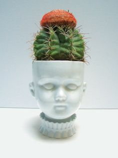 for my little cactus