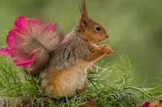 squirrel dance by Geert Weggen on 500px