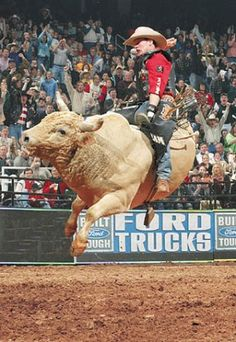 Little Yellow Jacket Verses Chris Shivers. At the World Arena in Colorado Springs in 2003, 2000 PBR World Champion Chris Shivers had a chance to ride him for $1,000,000, but was bucked off in less than two seconds..