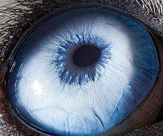 Amazing macro photography of animal eyes. -- lost at e minor
