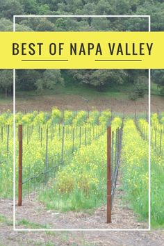 Napa Valley - First timers guide to Napa. What to do. Where to eat. Where to Stay. What wineries to visit. The best of Napa Valley