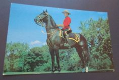 Vintage Royal Canadian Mounted Police Post Card Man In Uniform Red Jacket Canada