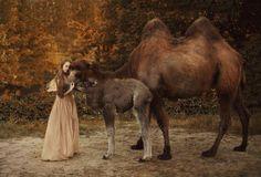 Katerina Plotnikova: Animais reais em fotografias surreias