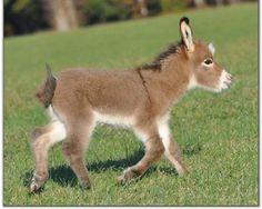 donkeys | Donkey Baby - Donkeys Wallpaper (25772239) - Fanpop fanclubs