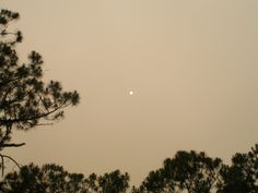 A few years back there were a bunch of fires not far from my home. That's the sun, shrouded in smoke