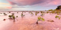 Mini mangroves in pink | Louise Denton Photography