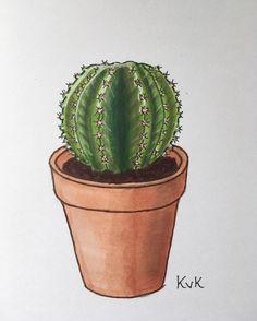 275 vind-ik-leuks, 17 reacties - plants & Illustrations ♡♡ (@drawingplantlady) op Instagram: 'Cactus drawing  #drawingplantlady'