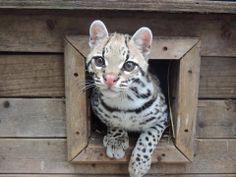 Visit Us Wildlife in Need
