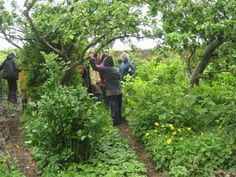 """Another edible forest garden! """"You can grow fruits, nuts, vegetables, herbs, mushrooms, other useful plants, and animals in a way that mimics natural ecosystems. You can create a beautiful, diverse, high-yield garden."""" http://www.edibleforestgardens.com/about_gardening"""
